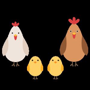 鶏(家族)のデザインイラスト