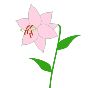 百合(ピンク)のシンプルイラスト