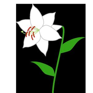 百合(白)のシンプルイラスト